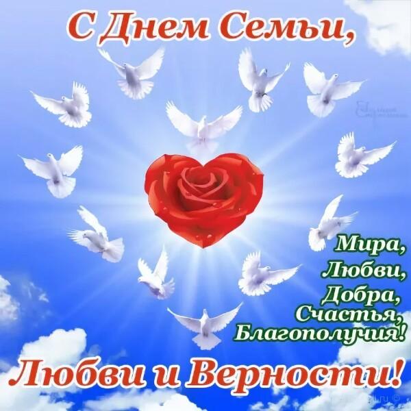 Открытка международный день семьи , с праздником день семьи , открытка белый голубь Картинка ,открытка с международным праздником день семьи ,открытка к празднику день семьи с белыми голубками , голубями , голуби,красивые цветы ,день любви и верности
