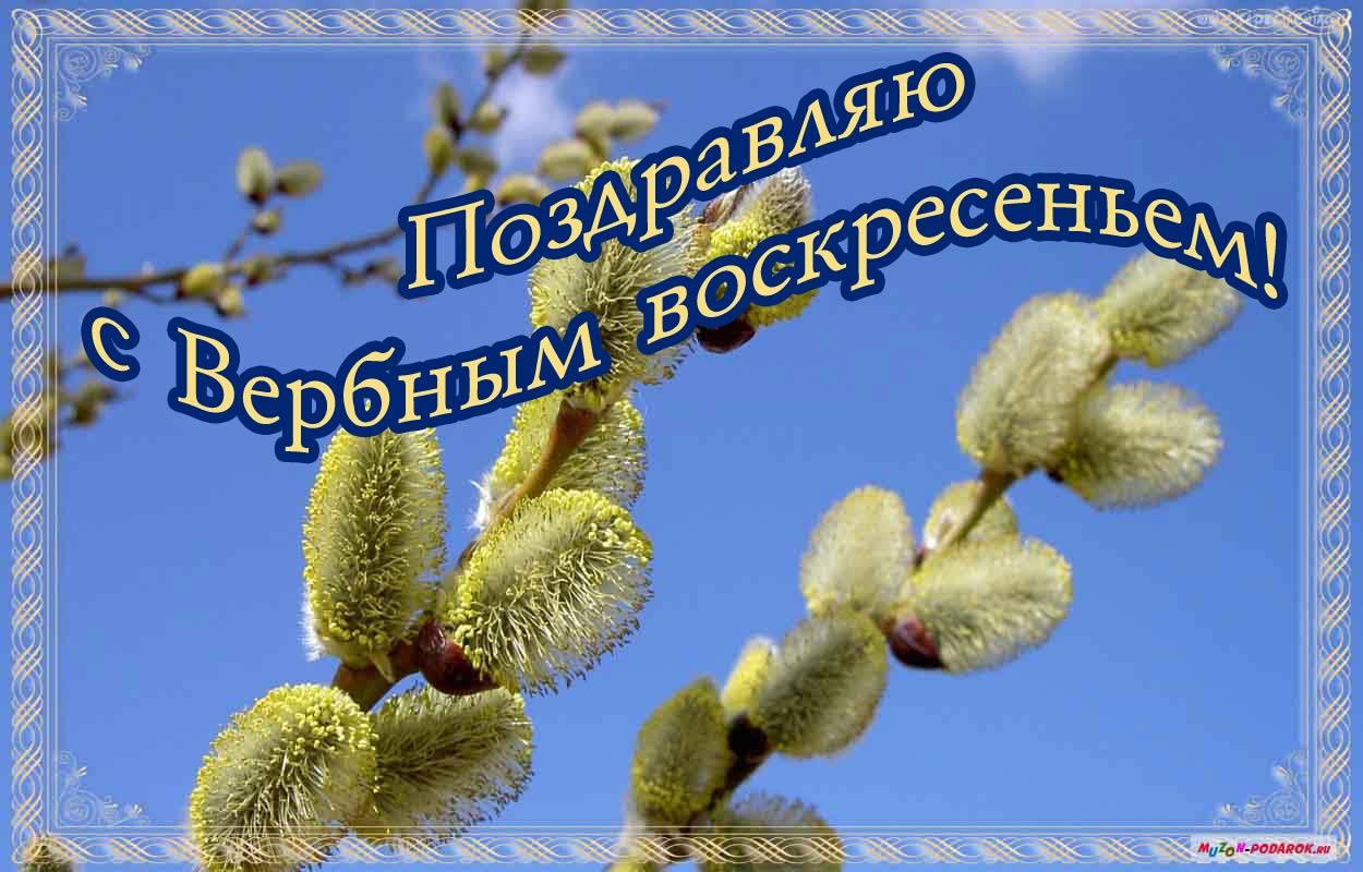 Вербное воскресенье православный праздник , открытка с вербой Вербное воскресенье православный праздник , открытка , картинка с изображением на открытке вербы , с вербным воскресеньем , вербы , красивые, весенние , пушистые вербы