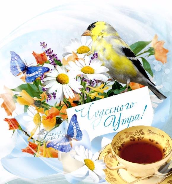 открытки доброе утро красивой природой ознакомительный экскурс самым