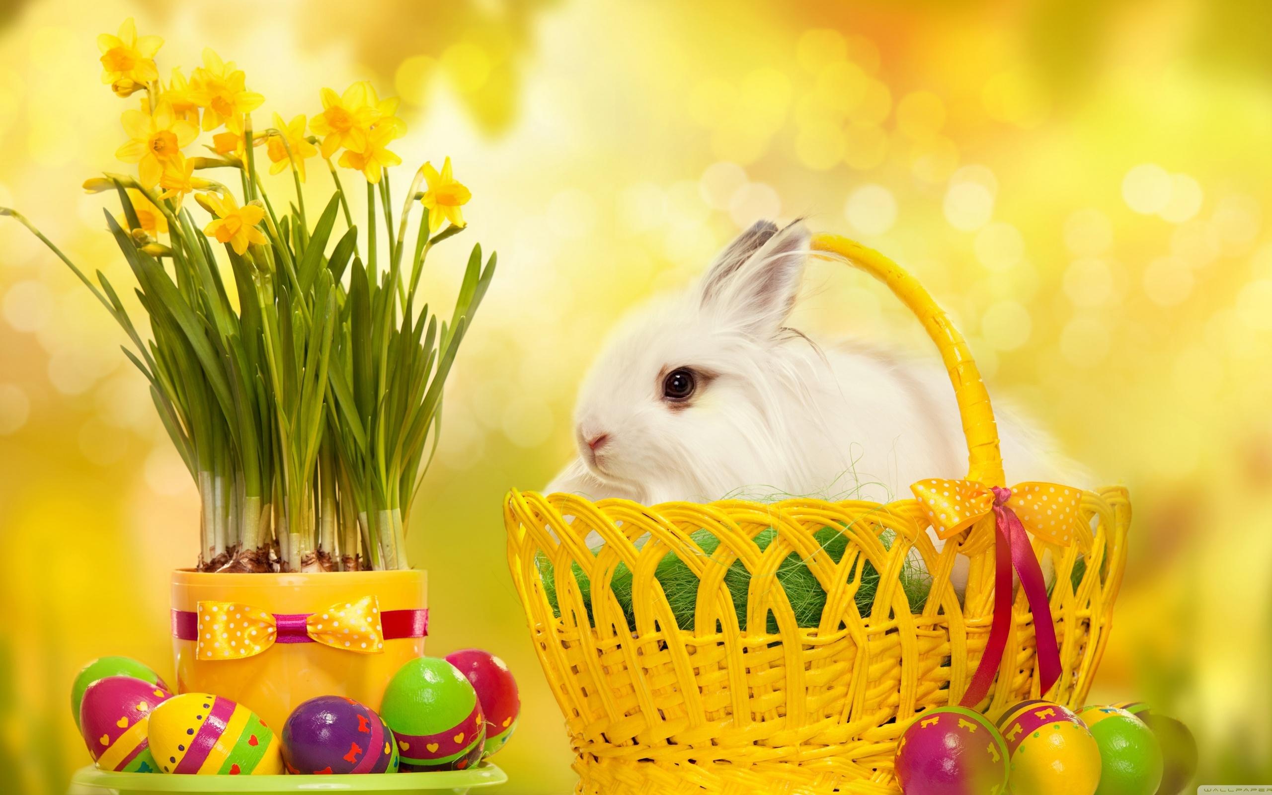 Праздник пасхи , со светлым праздником пасхи , открытки с зайчиком. Празник пасхи , светлый праздник пасхи , картинки , открытки с изображением на открытке зайчика , кролик , пасхальные , разноцветные яйца , яркие цвета , с пасхой.