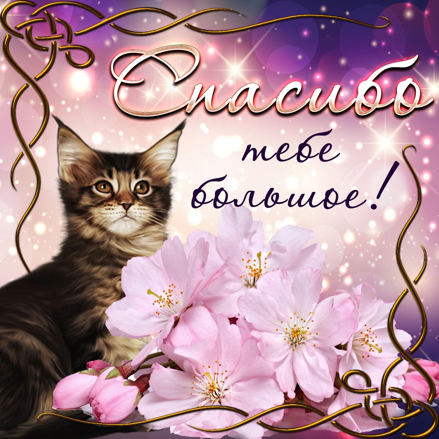 Открытки картинки со словом благодарности -спасибо , открытки спасибо,кошка. Картинки открытки с надписью спасибо ,открытка со словом спасибо ,картинка спасибо ,открытка со словом благодарности спасибо ,картинки спасибо скачать бесплатно