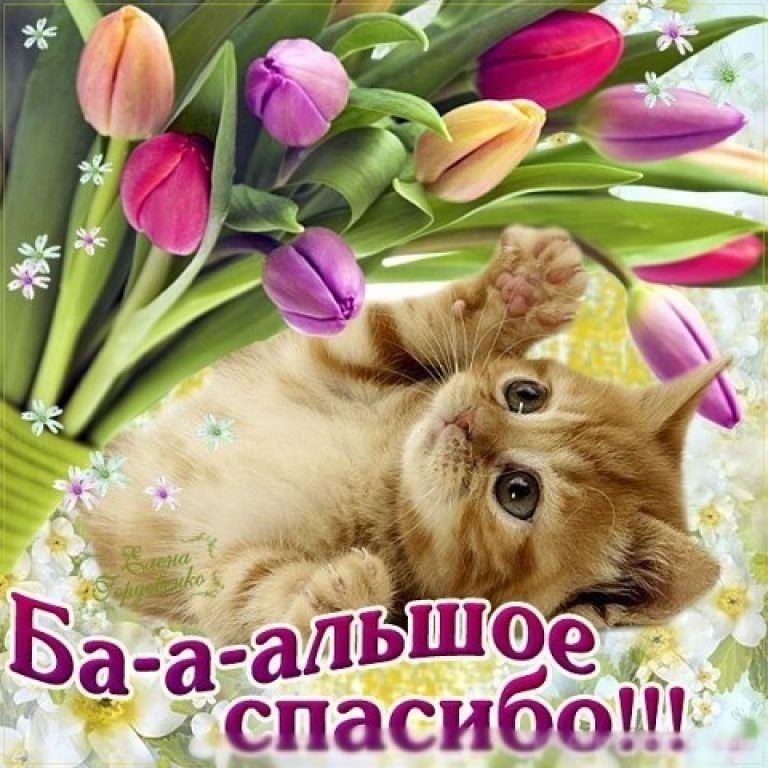 Открытки картинки со словом благодарности -спасибо , открытки спасибо,котёнок Картинки открытки с надписью спасибо ,открытка со словом спасибо ,картинка спасибо ,открытка со словом благодарности спасибо ,картинки спасибо скачать бесплатно