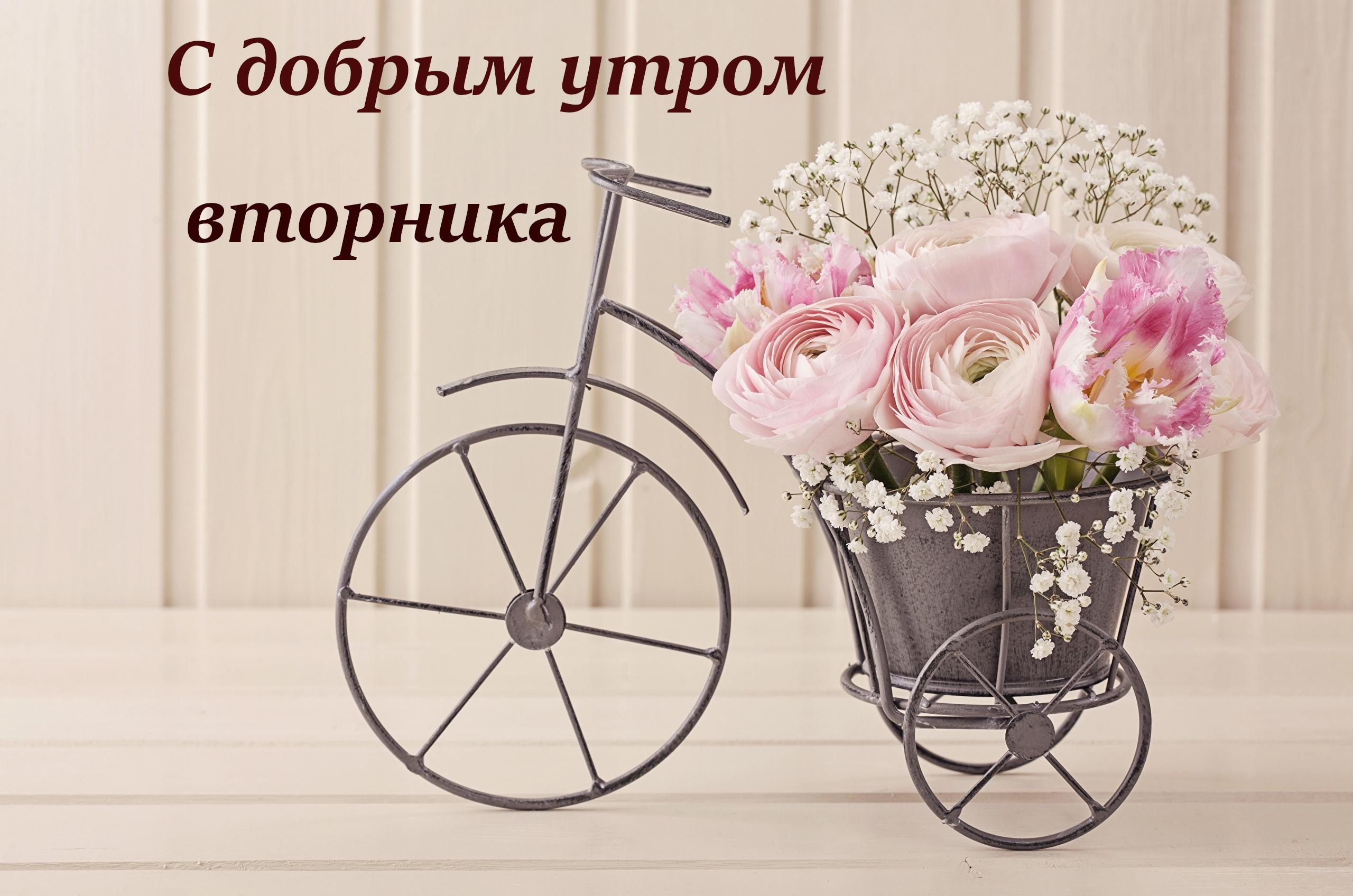 картинки здравствуй новый день вторник