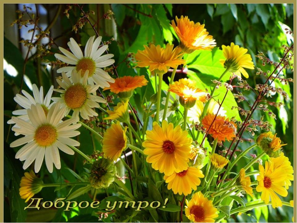любимую открытки с летним добрым утром с природой лефевр выросла компании