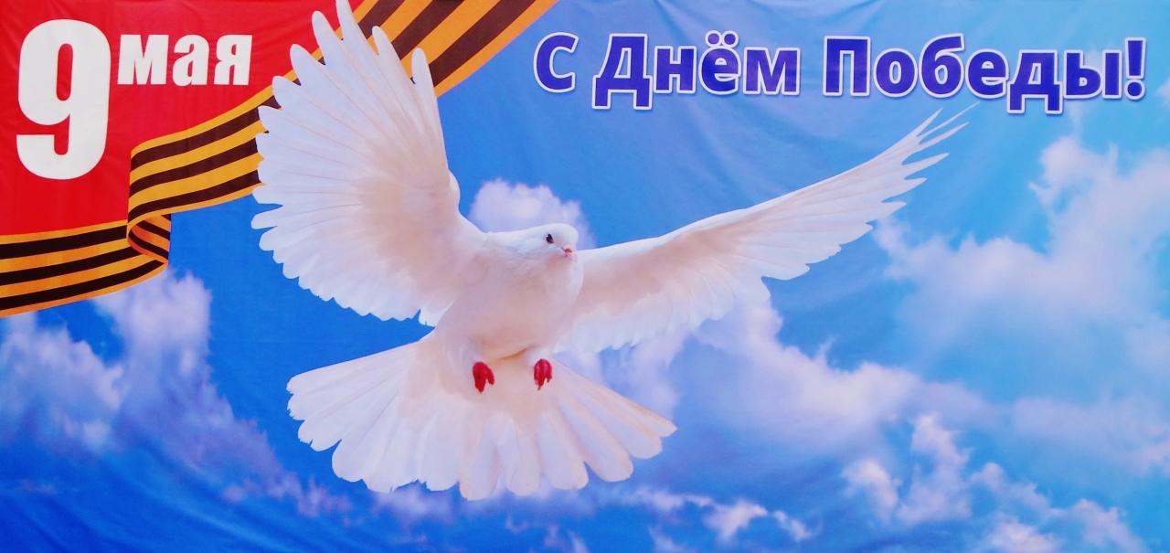 картинки с голубем мира к 9 мая норме