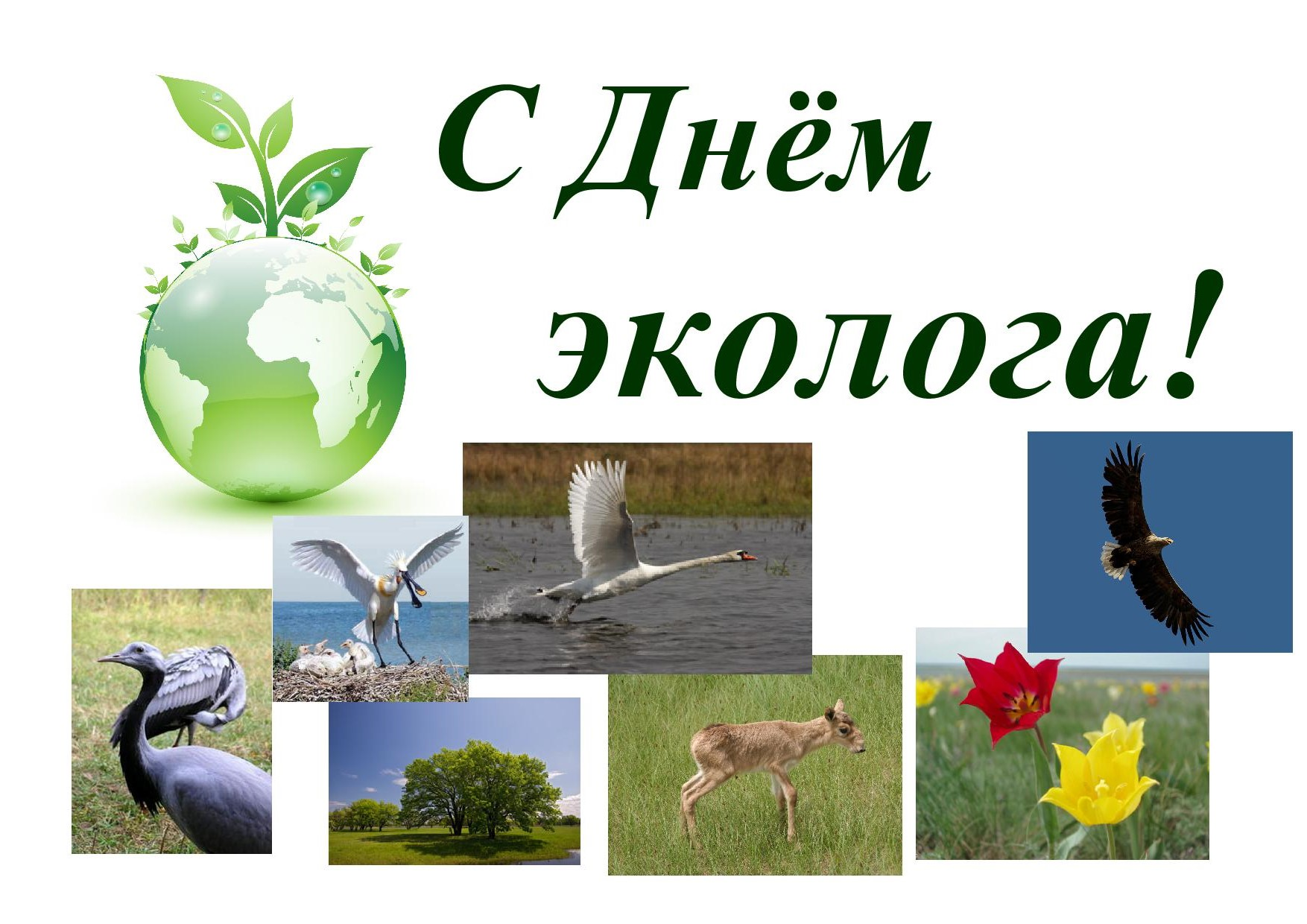 фото день эколога картинки девушка