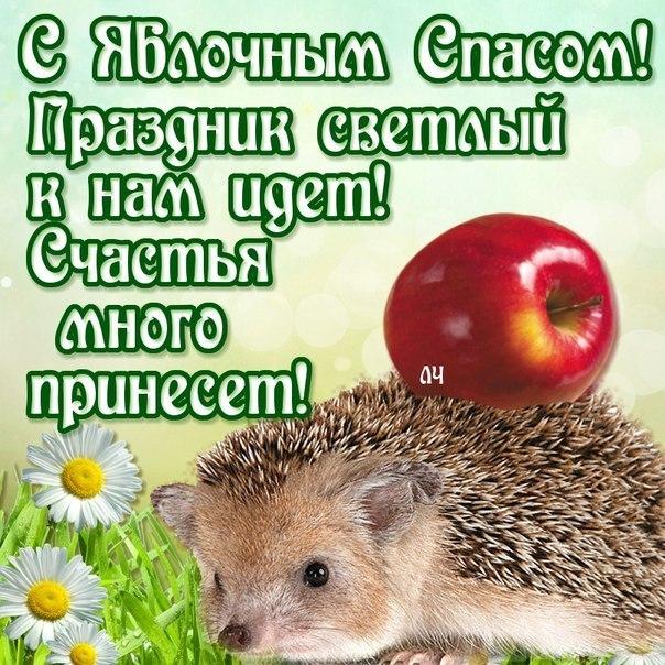 Яблочный спас народно христианский праздник , открытка с ёжиком. Яблочный спас народно христианский праздник , картинка , открытка с изображением ежа , ёжика ,красивые , яркие , красные яблоки , яблочки , с яблочным спасом .