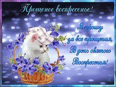 Прощёное воскресенье православный праздник последний день масленицы Прощёное воскресенье праздник православный последний день масленицы ,открытки , картинки с изображением на картинке кошки , с прощёным воскресеньем , с котёнком на открытке