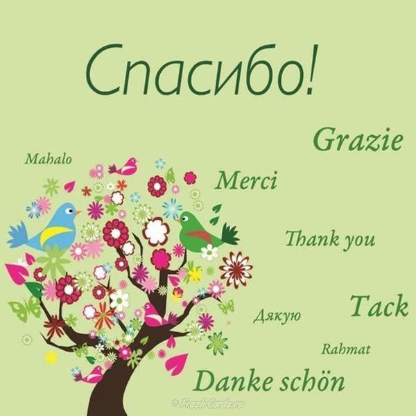 Спасибо за поздравление с днем рождения по английски