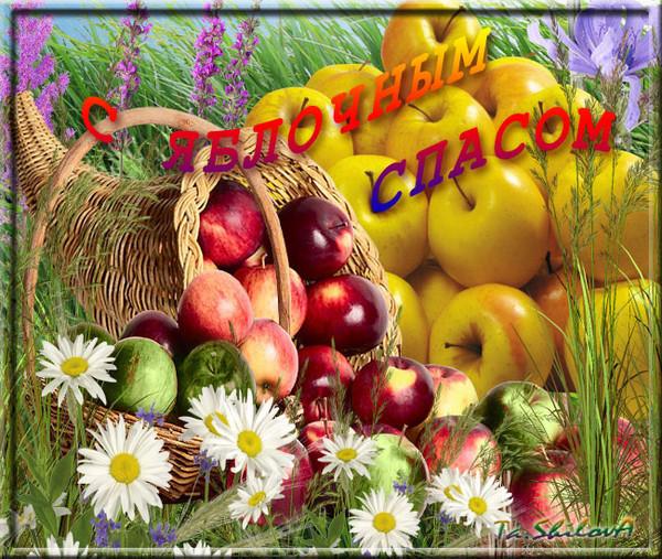 Яблочный спас народно христианский праздник , открытки карзина с яблоками . Яблочный спас народно христианский праздник , открытка , картинка с изображением карзины с красивыми яблоками , много яблок на картинке , с праздником ,с яблочным спасом