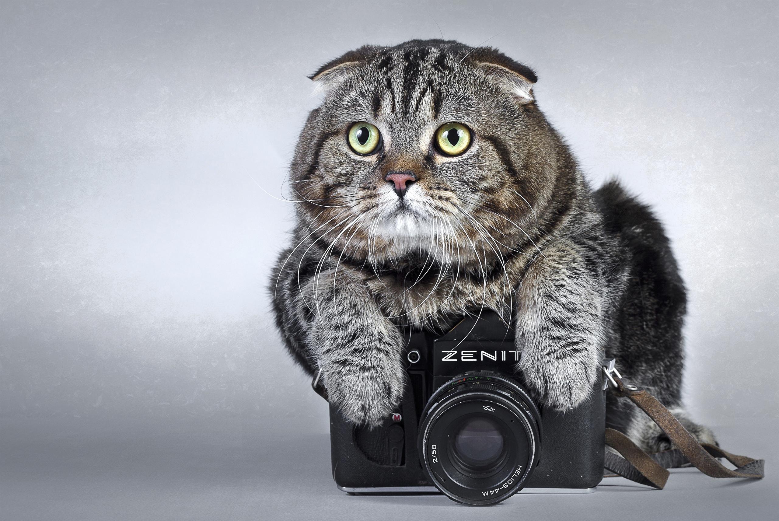 открытки с камерой эту